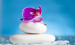 Spa still life with pink orchid and white zen stone in a serenit Royalty Free Stock Images