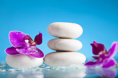 Spa still life with pink orchid and white zen stone Stock Images