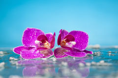 Spa still life with pink orchid and white zen stone Royalty Free Stock Image