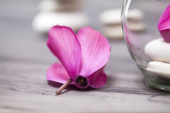 Spa still life with pink orchid, white zen stone and tea candle Stock Image