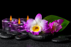 Spa still life of purple orchid dendrobium, green leaf Calla lil Royalty Free Stock Photos