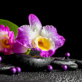 Spa still life of purple orchid dendrobium, green leaf Calla lil Royalty Free Stock Images
