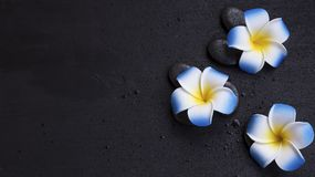 Spa still life setting with frangipani flowers Stock Photography