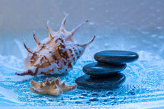 Spa still life with shell and stone for banner Stock Photo
