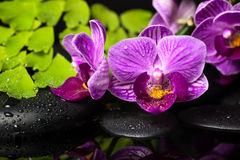 Spa still life of violet orchid (phalaenopsis), green branch Royalty Free Stock Photos