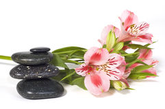 Spa still life with wild pink orchid Stock Photography