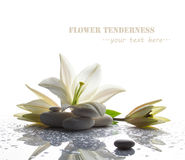 Free Spa Still Life With White Lily Stock Images - 42165644