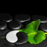 Spa still life of Yin-Yang stone texture and green leaf Calla li Royalty Free Stock Photos