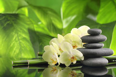 Spa. Still life with zen stones,bamboo and orchid flower stock image