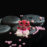 Spa still life of zen stones with drops, orchid cambria flower Stock Images