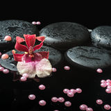 Spa still life of zen stones with drops, red orchid cambria Stock Photos