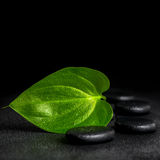 Spa still life of zen stones and green leaf on black background. With dew, closeup royalty free stock photo