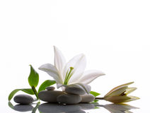 Spa still  with white  lily Royalty Free Stock Photography