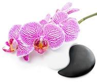 Spa stilleben av den härliga orkidéblomman och Yin-Yang Arkivfoto