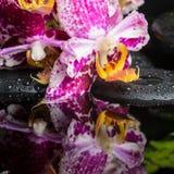 Spa stilleben av härligt snör åt den lila orkidén (phalaenopsis), gr Arkivbilder