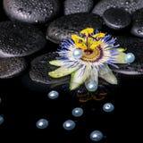Spa stilleben av passiflorablomman på zenbasaltstenar med dren Arkivbilder