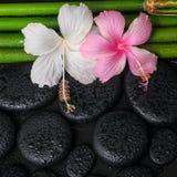 Spa stilleben av vit, rosa hibiskusblommor och den naturliga bamboen Royaltyfria Foton