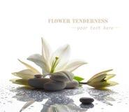 Spa stilleben med den vita liljan Arkivbilder