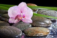 Spa stilleben med uppsättningen av rosa orkidé och stenar Arkivbild