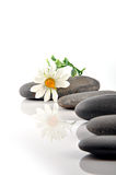 Spa stones. With flower on white background Royalty Free Stock Image
