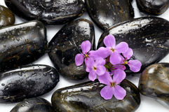 Spa stones Royalty Free Stock Photography