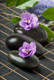 Spa stones. With purple flower and lavender salt Stock Photo