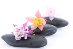 Spa Stones And Flowers Royalty Free Stock Photo