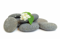 Spa Stones And Jasmine Royalty Free Stock Photography