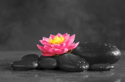 Spa stones with beautiful flower royalty free stock image