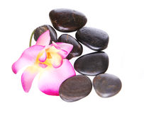Spa stones and  beautiful hot pink orchid flower isolated Royalty Free Stock Photo