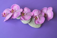 Spa stones and orchid flower. Royalty Free Stock Image