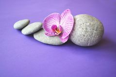 Spa stones and orchid flower. Stock Photography