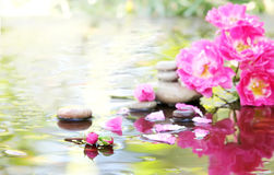 Spa stones with drops and rose in water Stock Image