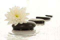 Spa stones and flower Royalty Free Stock Photos