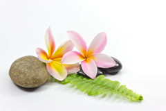 Spa stones and flower. Spa stones and Frangipani flower royalty free stock photo
