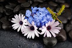 Spa stones with  flowers on dark background Royalty Free Stock Images