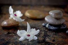 Spa stones and flowers on the dark background. Spa stones and flowers on the dark background stock image
