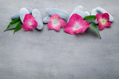 Spa stones and flowers, on grey background. Stock Photo