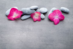 Spa stones and flowers, on grey background Royalty Free Stock Photos