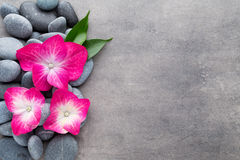Spa stones and flowers, on grey background. Royalty Free Stock Images