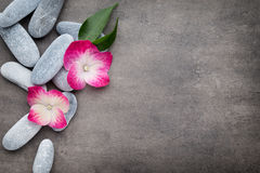 Spa stones and flowers, on grey background. Royalty Free Stock Photos