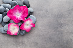 Spa stones and flowers, on grey background. Royalty Free Stock Photo