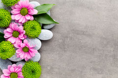 Spa stones and flowers on grey background. Stock Images