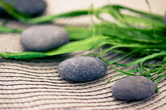 Spa stones and flowers, wellness/beauty care Royalty Free Stock Images