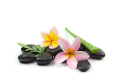 Spa stones and Frangipani. Flower Stock Photos