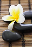 Spa stones with frangipani Stock Photo