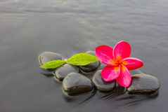 Spa stones and frangipani flower purple Royalty Free Stock Photos