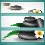 Spa Stones With Frangipani Flower. Stock Image