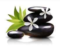Spa stones with frangipani flower vector vector illustration