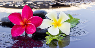 Spa stones and frangipani flowers Stock Photography
